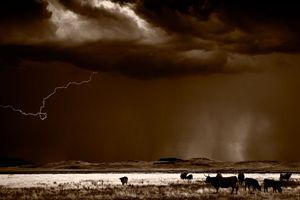 Cattle & Lightning