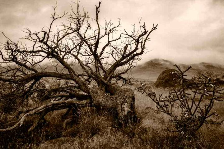 Dead Tree & Fog - David Kachel