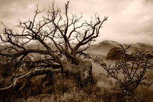 Dead Tree & Fog