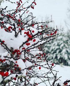 Growth Among The Cold