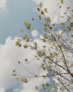 Summer Is Leafing