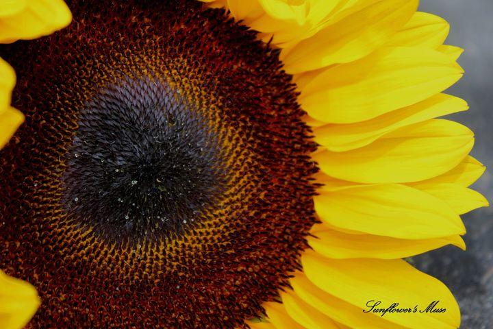 Sunflower's Muse - Sunflower's Muse