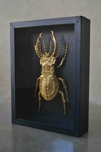 Lucarnus Cervus - Galerie Martin Sauvage