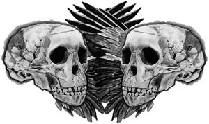 Skull and Wing Reflection