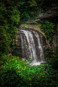Looking Glass Falls - Cathy Harper Photography and Designs