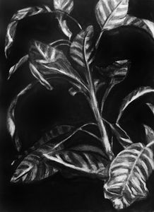 Untitled Plant Study