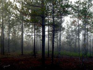 Misty Bayou