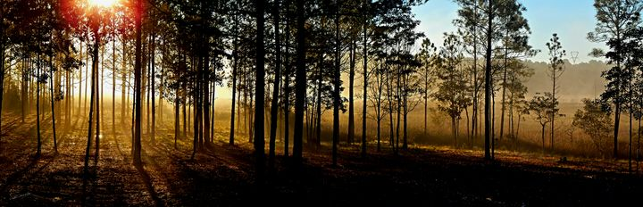 Winter Morning Bayou Panorama - Shadow and Form