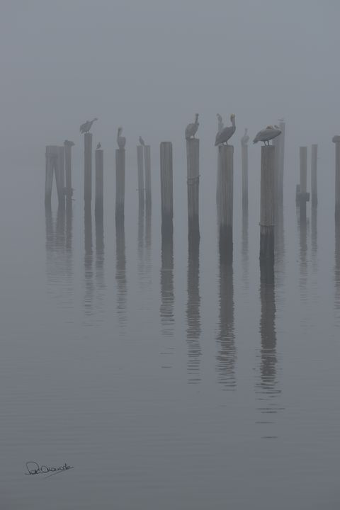 Pelicans in the Gulf Fog - Shadow and Form