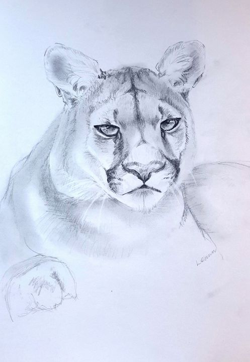 Mountain Lion - Shadow and Form
