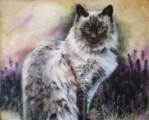 The Cat's in the Lavender Again