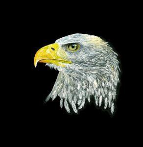 American Bald Eagle fine art drawing