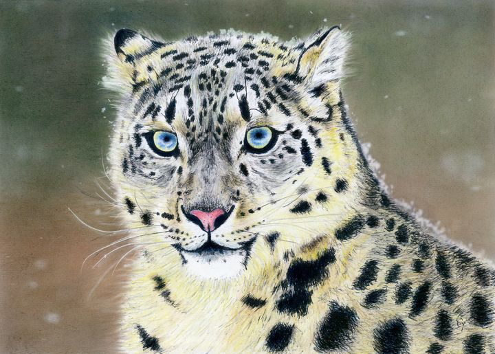 Snow Leopard - Traveling Pencils