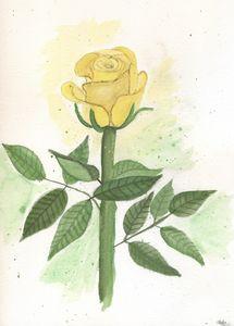 Modern yellow Rose