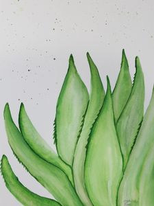 calming Aloe