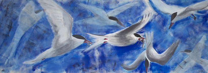 Arctic Tern's Feeding - Bronwyn Garfirth
