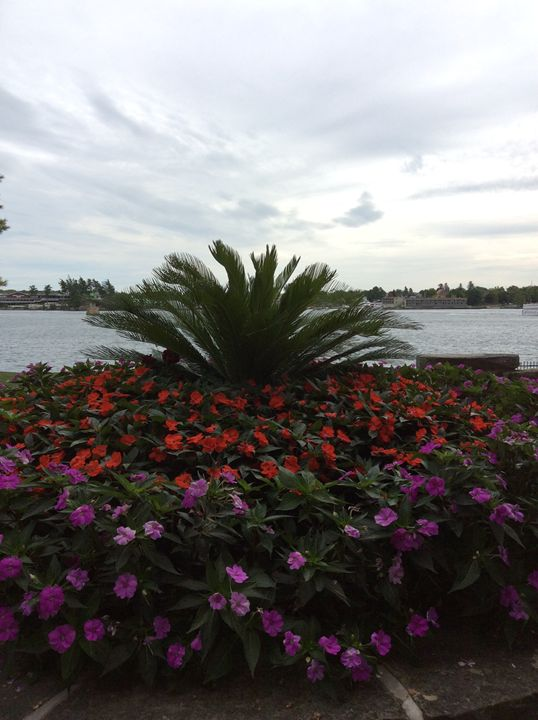 Palm tree & flowerbed - Sahar