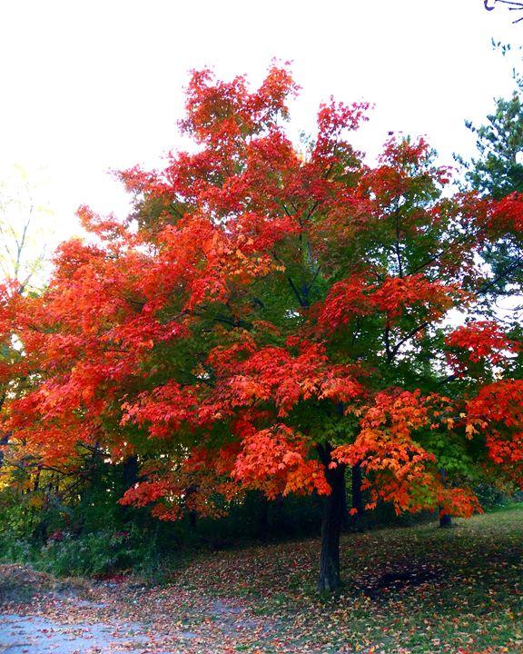 Autumn in Canada - Sahar