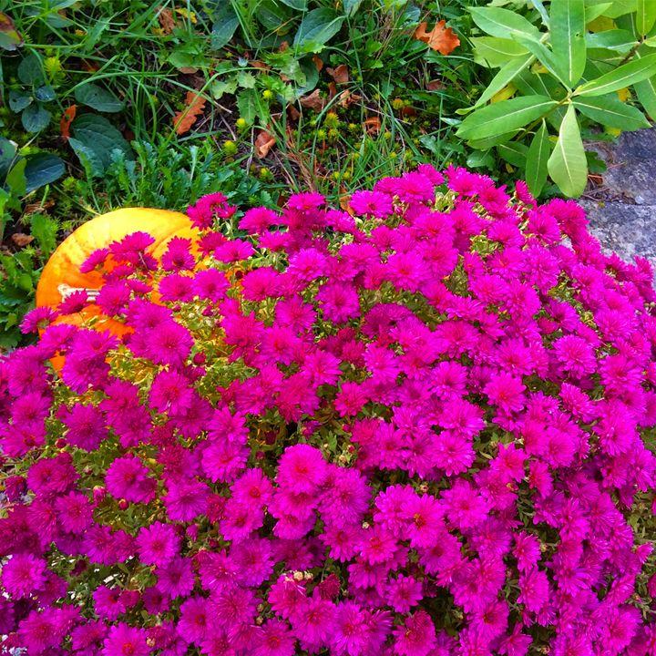 Pumpkin and flowers - Sahar