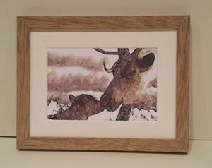 Reindeer & Calf