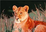 Lioness Limited Edition Print