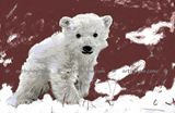 Polar Bear Cub Limited Edition Print