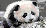 Panda Cub Limited Edition Print