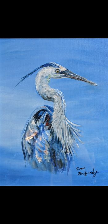 Blue Everglades Heron - Tom Breckenridge