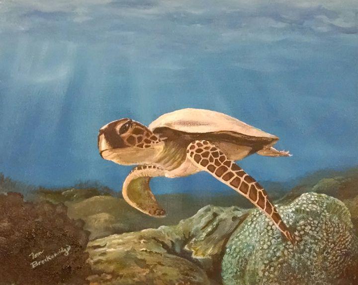 Young Sea Turtle - Tom Breckenridge