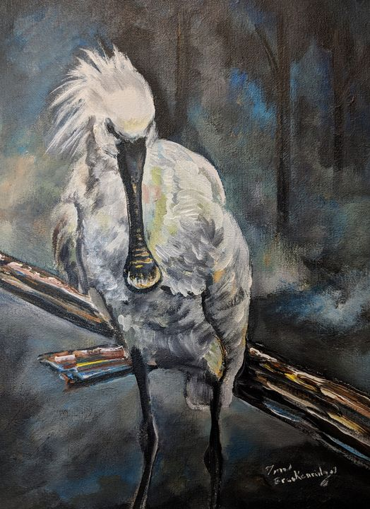 Spoonbill - Tom Breckenridge