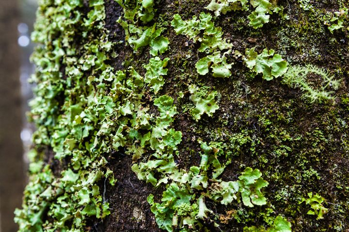 Moss on a Tree - Man On A Roof Productions