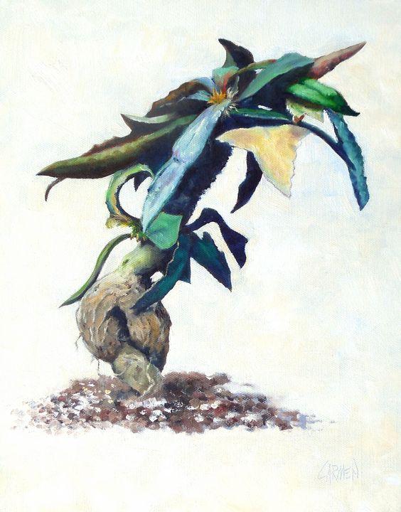 Euphorbia Francoisii - Carmen Beecher