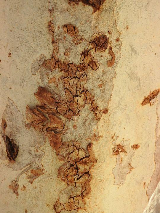 Bark Art from Nature - Adbetron