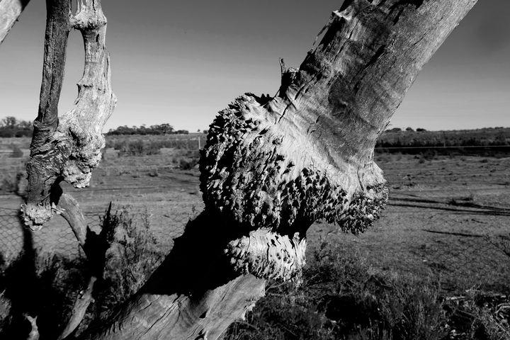 Wood Burls, - Adbetron