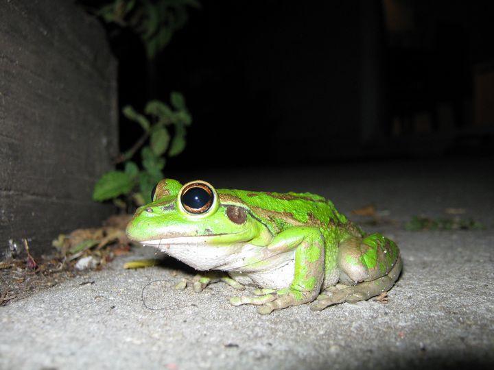 Frog.............Yea? - Adbetron