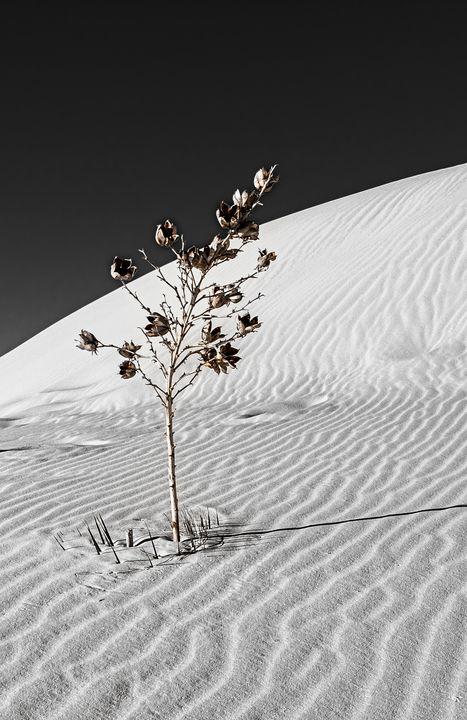 White Sands National Park #4 1 of 2 - Lou Novick