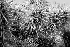 Cactus No. 4