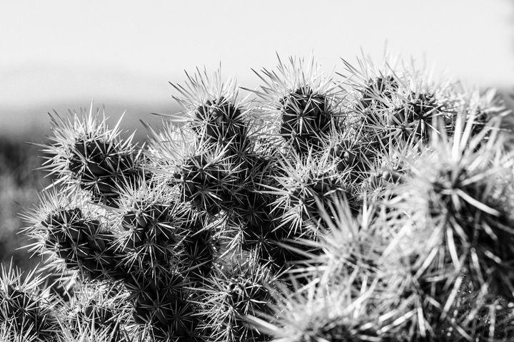 Cactus No. 1 - Amy Lynn Grover