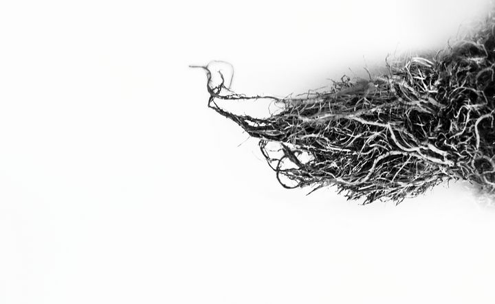Roots - Amy Lynn Grover
