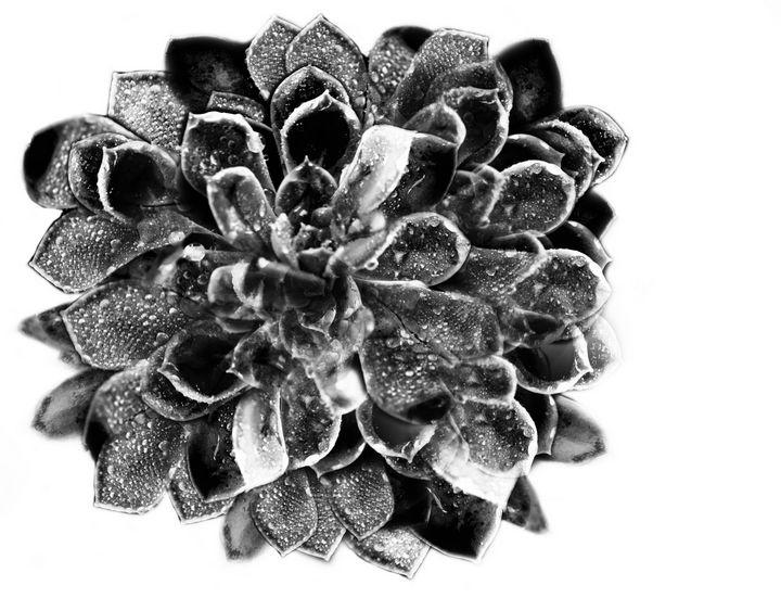 Sparkle Succulent - Amy Lynn Grover