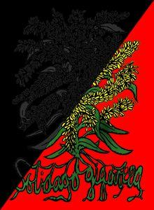 Solidago Gigantea - Anarcho-synd