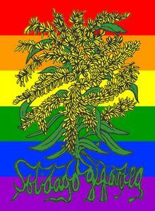 Solidago gigantea - Pride - Goldenro