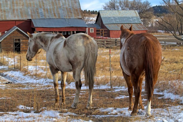Ranch Horses - Photography by Alana I Thrower