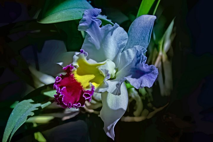 Fantasy Orchid - Photography by Alana I Thrower