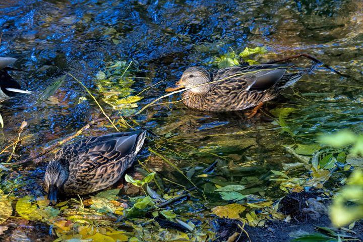 Autumn Swim - Photography by Alana I Thrower