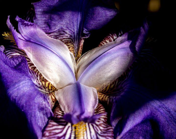 Wild flower - Marin Gelussi