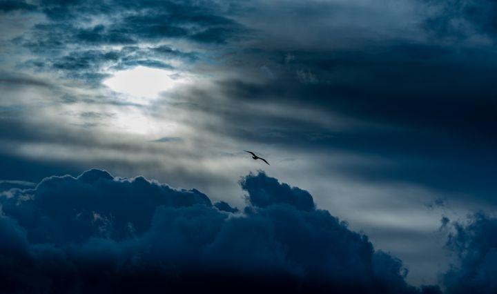Free fly - Marin Gelussi