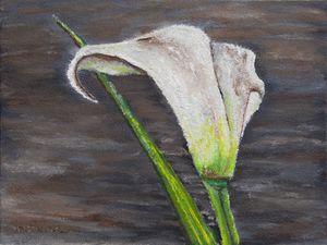 Oilpainting - Flower Calla