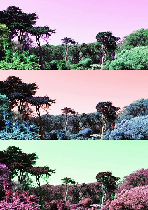 Colors of Nature - The Garden of Art