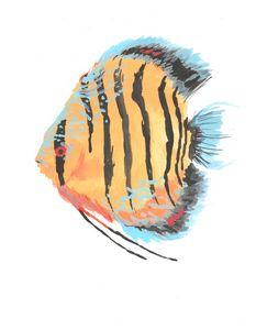 Symphysodon discus (Wild Discus)